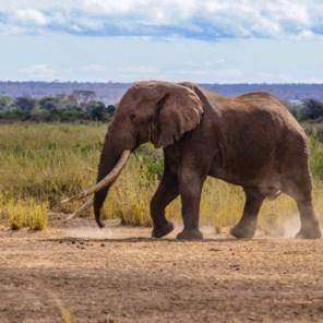 Opnieuw twaalf dode olifanten gevonden in Zimbabwe