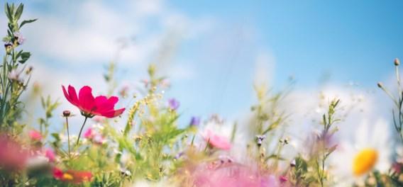 Hoe zonniger het weer, hoe kleuriger de bloemen
