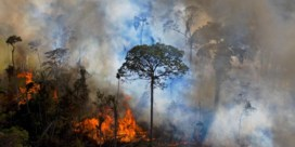 Raakt 'ecocide' voorbij de symboliek?