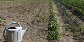 Beleggen in regenwater als wapen tegen de droogte