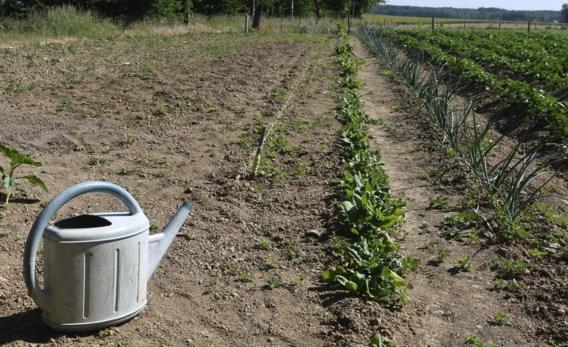 Beleggen in regenwater: het wapen tegen de droogte