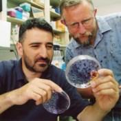 Nobelprijs Geneeskunde voor hepatitis C-virusjagers