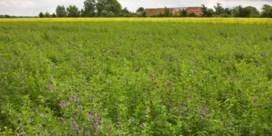Ecologischer werken kan boer toch geld opleveren