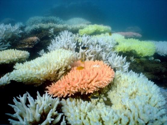 Einde dreigt voor Australisch koraalrif