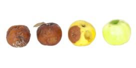 Veel rotte appels maken een mand