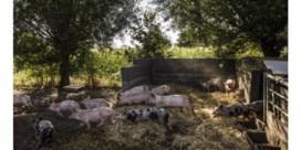 'Ik wil lokaal voedsel, maar mogen grote bedrijven dan geen subsidies meer krijgen?'
