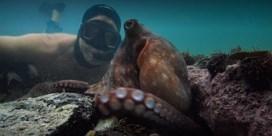 Mijn arm voor een octopus
