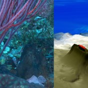 Wetenschappers ontdekken koraalrif hoger dan Eiffeltoren