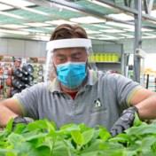 Coronablog | Ook doe-het-zelfzaken en tuincentra mogen openblijven