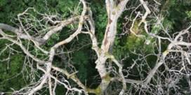 Kunnen we wel op bomen rekenen om de CO2-uitstoot te compenseren?