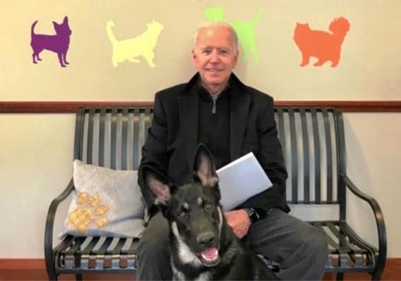 Samen met Biden doet eerste asielhond intrede in Witte Huis