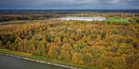 Beringen wil twintig hectare bos kappen in Ravenshout Noord