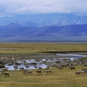 Waarom Trump de oliesector nog snel wil plezieren in Alaska