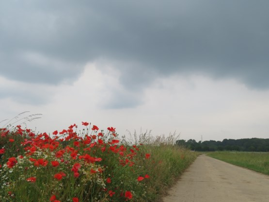 Bewolkte en winderige dag met af en toe regen