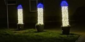 'Kerstpiemels' Oudenburg zijn plots wereldnieuws