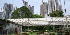 Singapore, waar boeren hun veld bewerken in de hoogte