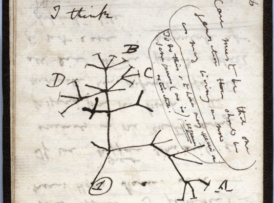 Notitieboekjes Darwin wellicht gestolen