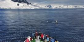 Walvissen herademen in stilte van coronacrisis