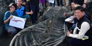 'Een zeldzame vondst': duizenden jaren oud walvisskelet gevonden in Thailand