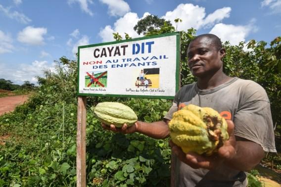 'Bedrijven blijven structurele problemen in cacaosector negeren'