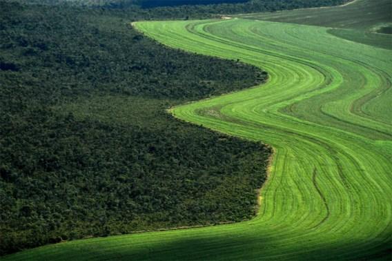 Drie voetbalterreinen per minuut ontbost in Braziliaans regenwoud