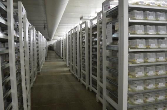 Vlaamse kweker wereldleider met insecten voor 'biologische oorlogsvoering'
