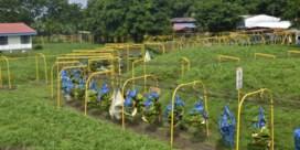 Fruitkoning Hein Deprez verliest zijn plantages