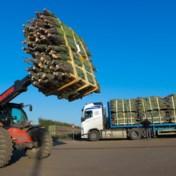 'Klanten wilden eind oktober al een kerstboom'