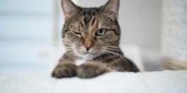 Het enigma van de kattenvacht