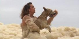 Hond gered uit dikke laag zeeschuim na extreem weer in Australië