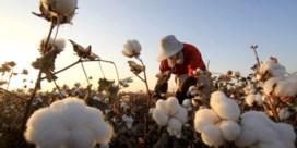 Dwangarbeid in Xinjiang is grootschaliger dan gedacht