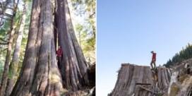 Ooggetuige | Na de houtkap in Canada