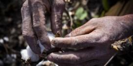 Ook met katoen uit Oezbekistan en Kazachstan is dwangarbeid gemoeid