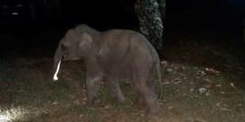 Reddingswerker reanimeert olifantenjong in Thailand