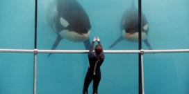 Opinie | Het jaar van de orka