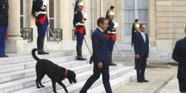 Hond Macron in video over adoptie huisdieren