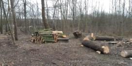 Ophef over kappen van bomen in Pippezijp