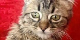 ' er een huiszoeking naar een kat zou worden bevolen