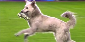 Voetbalmatch minutenlang verstoord door speelse hond op het veld