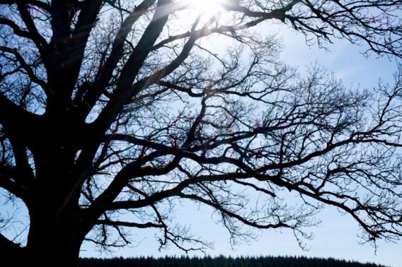 Weerbericht | Zwaarbewolkt met nog enkele plaatselijke winterse buien