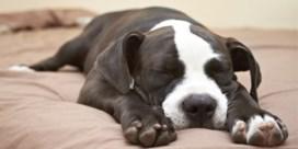 Hondenvoeding uit rekken gehaald: 'Stop onmiddellijk met je huisdier dit product te geven'