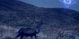 Schotten vieren eindejaar met wonderlijke droneshow