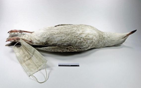 De 'mondkapmeeuw', het symbool voor dodelijke slachtoffers van rondslingerende mondmaskers