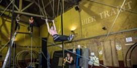 Iedereen aan de trapeze op Antwerps MAD-festival