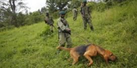 Zes rangers gedood in Virungapark