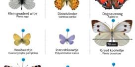 Vlinders hebben meer nodig dan intensieve zorg