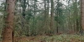 Natuur en Bos wil nu toch kappen in Vagevuurbos