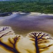 Fotograaf legt prachtig natuurverschijnsel vast: 'Het zijn net levensbomen'