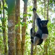 Klimaatverandering trekt tropische regengordel scheef: regenwouden in gevaar