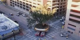 Huzarenstuk om 300 jaar oude eik door stad te verhuizen